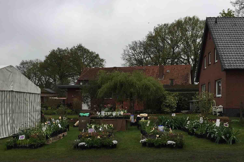 Olivenabholtage in Wilstedt