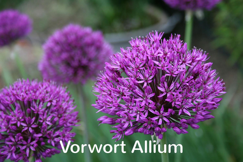 Vorwort Allium