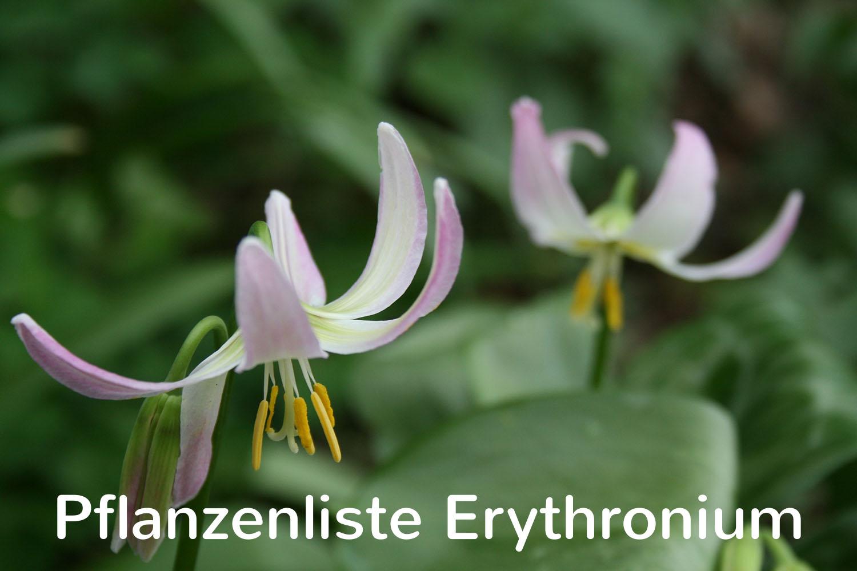 Pflanzenliste Erythronium
