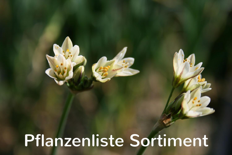 Pflanzenliste Sortiment