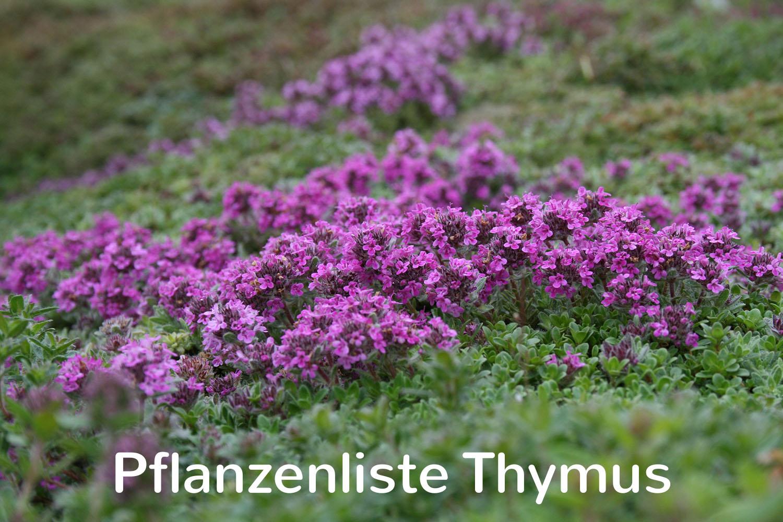 Pflanzenliste Thymus