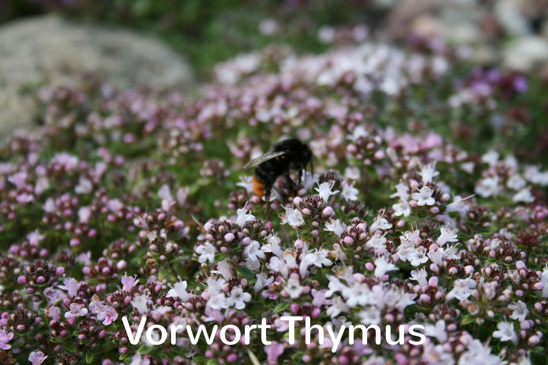 Vorwort Thymus
