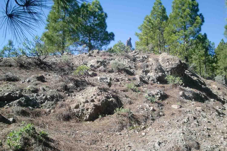Steiniger Felshang im offenen Pinienwald mit Thymian, Salbei, Micromeria und Erysimum als Nachbarn