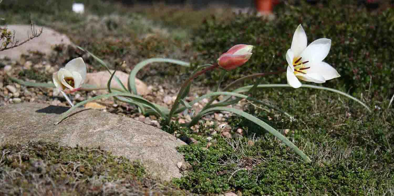 Zauberhafte Momente im zeitigen Frühjahr