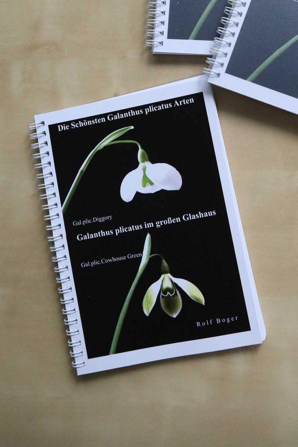 Die schönsten Galanthus plicatus Arten
