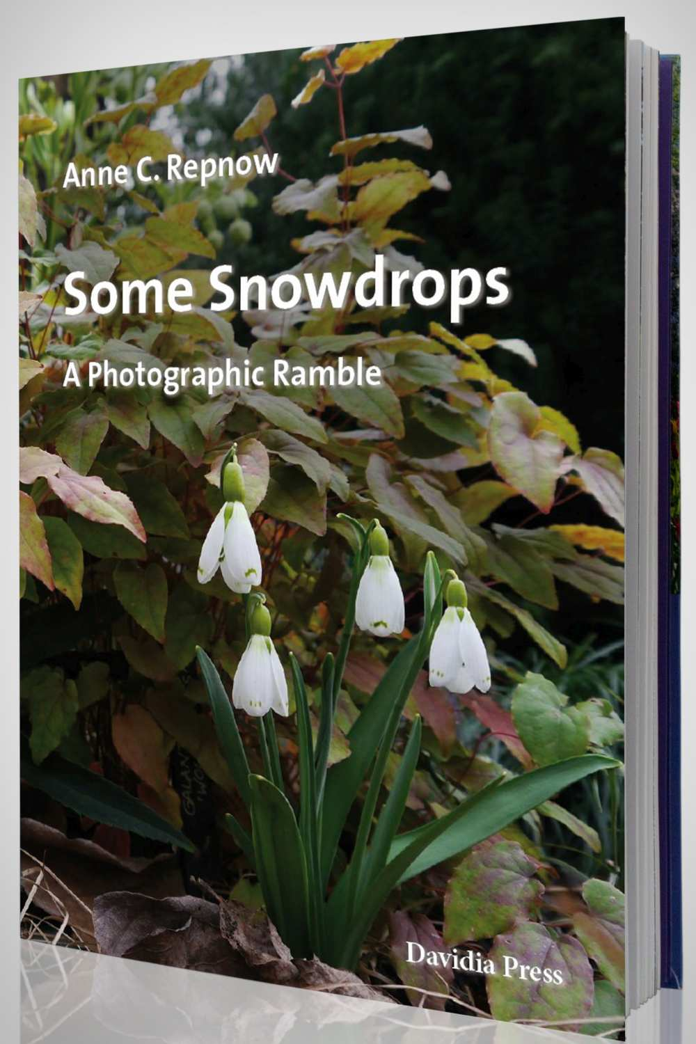 Some Snowdrops A Photographic Ramble